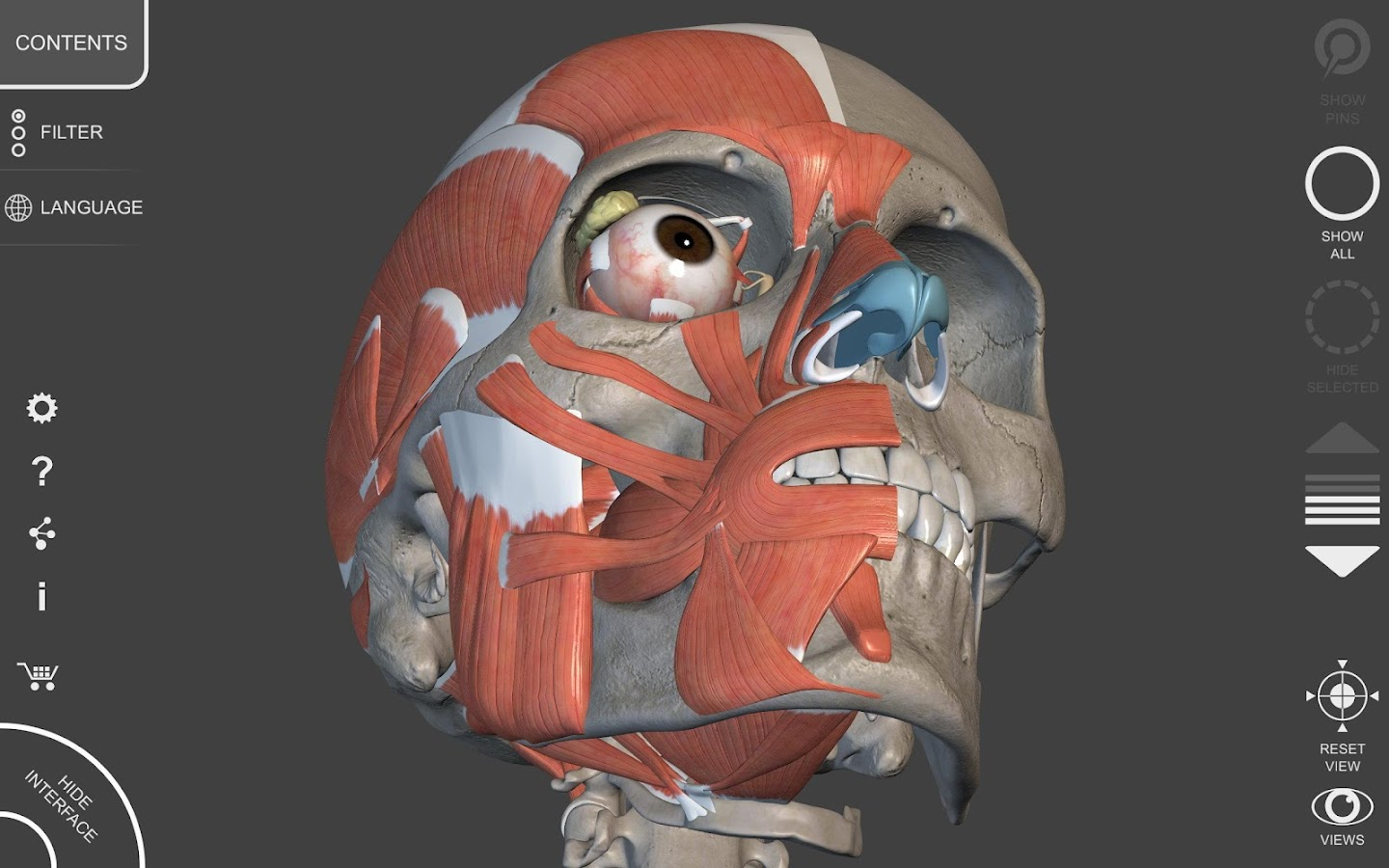 Muscular System - 3D Anatomy 1.3.2 APK Download - Android Medical Apps