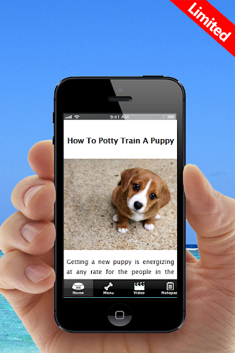 how to potty train a 6 week old puppy
