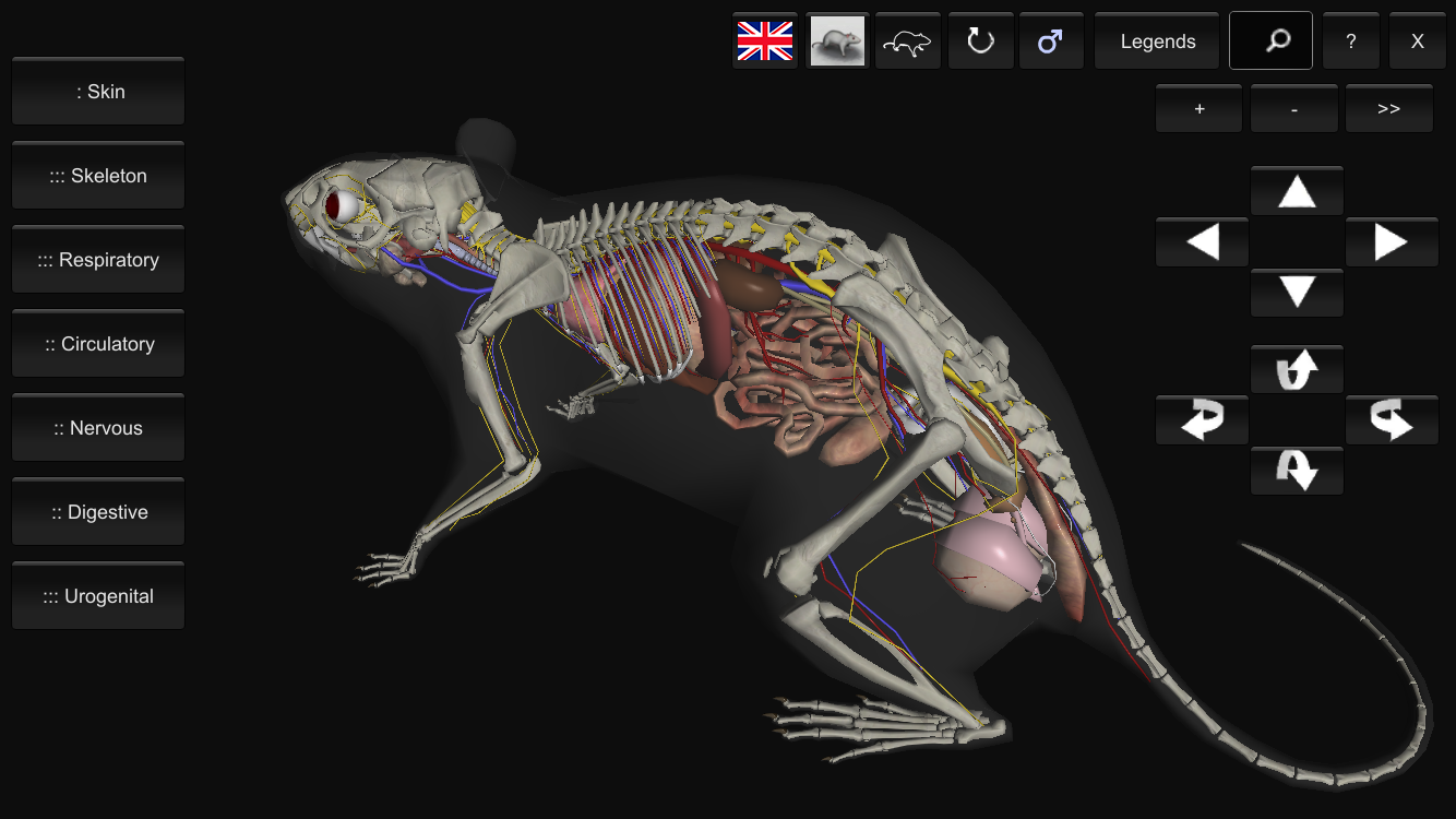 3D Rat Anatomy 1.21 APK Download - Android Education Apps