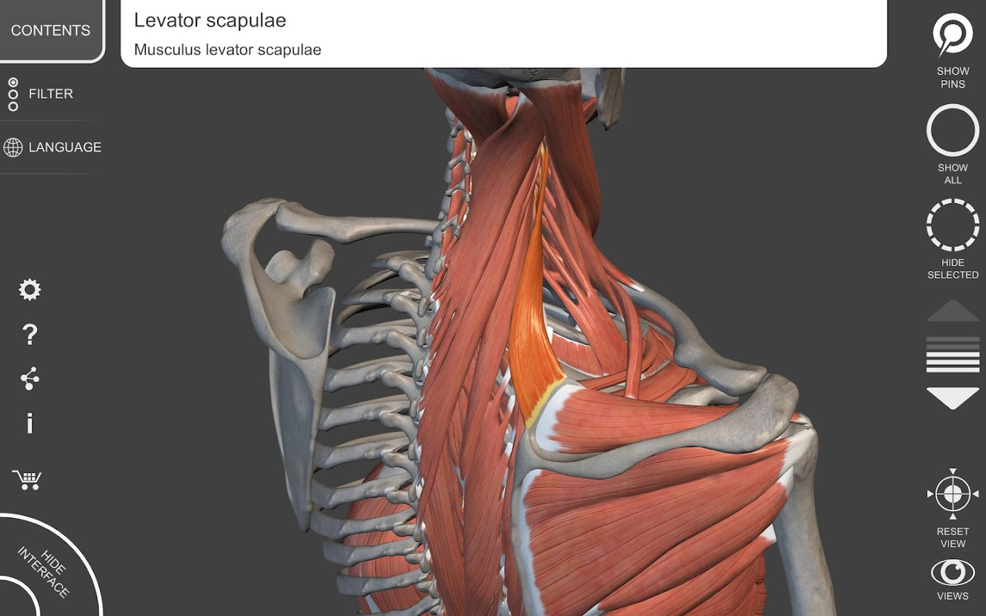 Muscle | Skeleton - 3D Atlas of Anatomy 1.7.5 APK + OBB (Data File ...