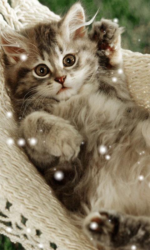 Cute Cat Wallpapers 10 Screenshot 3