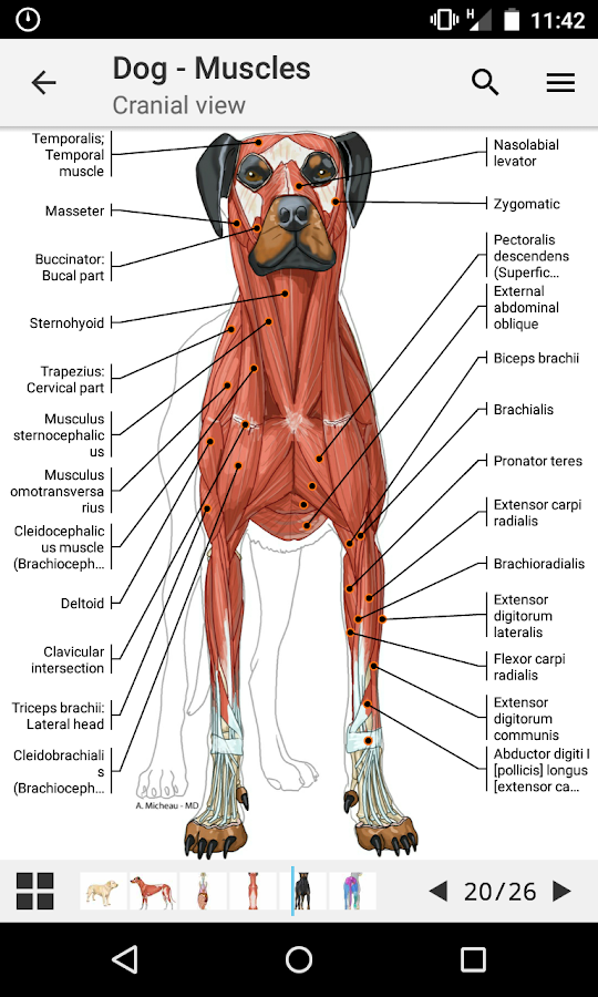 vet-Anatomy 1.9.0 APK Download - Android Medical Apps