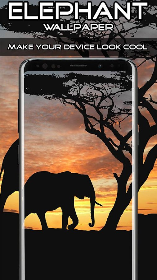 Elephant Wallpaper Hd 4k 50 Apk Download Android