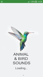 Bird and Animal soundboard 4.7 screenshot 6