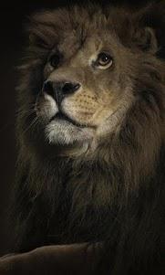 Lion Live Wallpaper : 7fon & LWP 10.0 screenshot 1