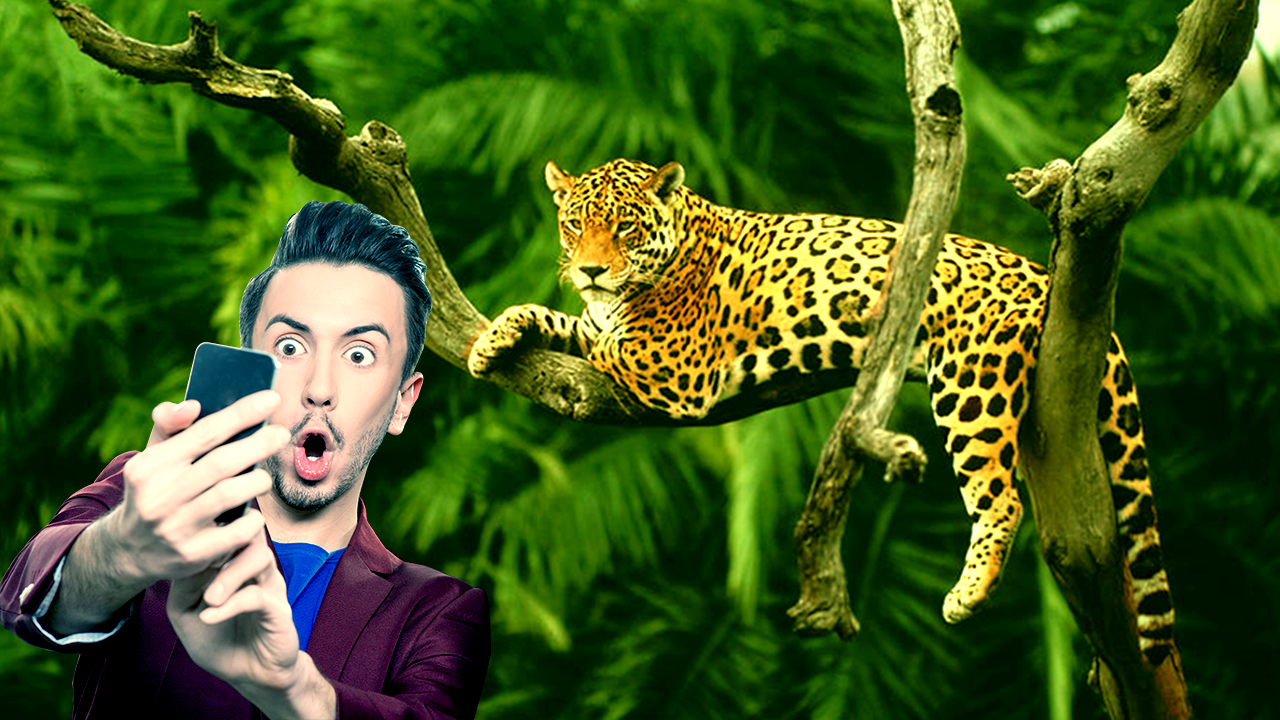 Wild Animal Photo Editor 1 4 Apk Download Android Photography Apps