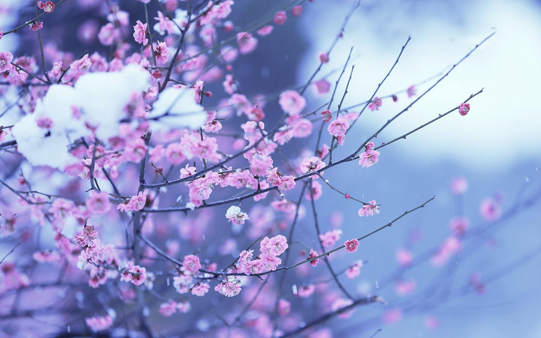 Spring Flowers Wallpaper 101 Screenshot 1