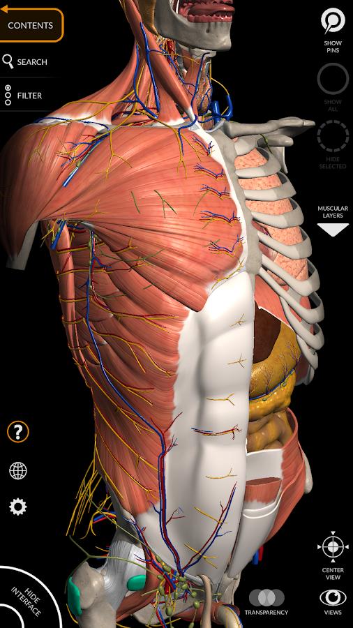 com catfishanimationstudio MuscularSystemLite 2 0 0 APK + OBB (Data