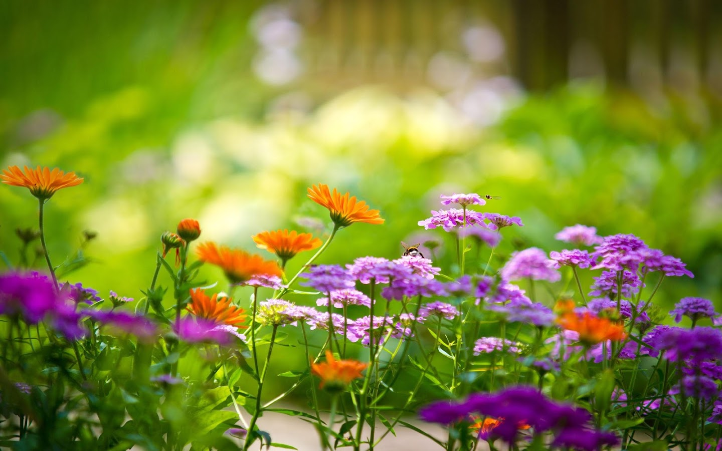 Garden live wallpaper hd flower background 3d 24 apk download garden live wallpaper hd flower background 3d 24 screenshot 6 izmirmasajfo