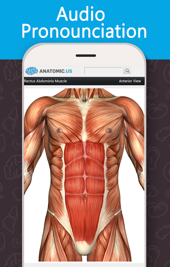 Anatomy Game Anatomicus Pro 1.5 APK Download - Android Education Apps