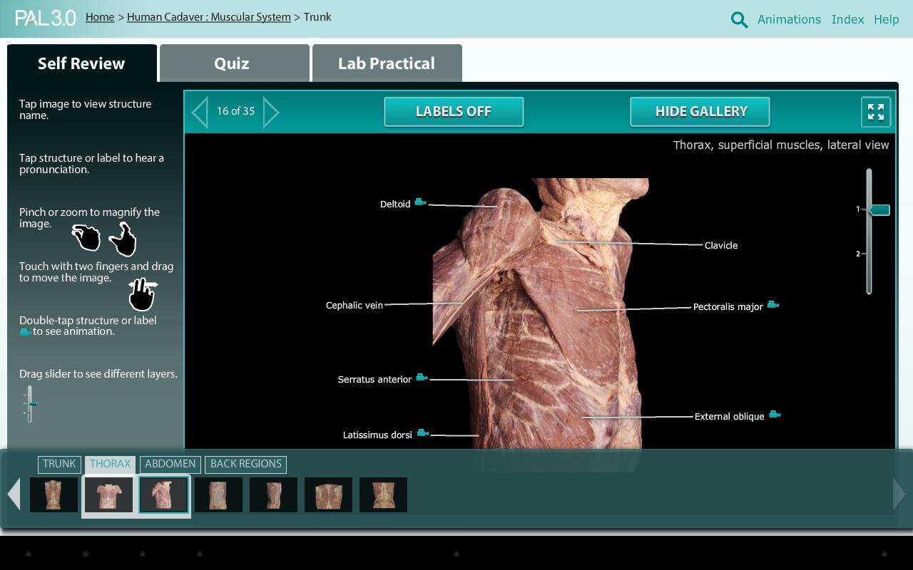 Practice Anatomy Lab (PAL3) 1.0.7 APK Download - Android Education Apps