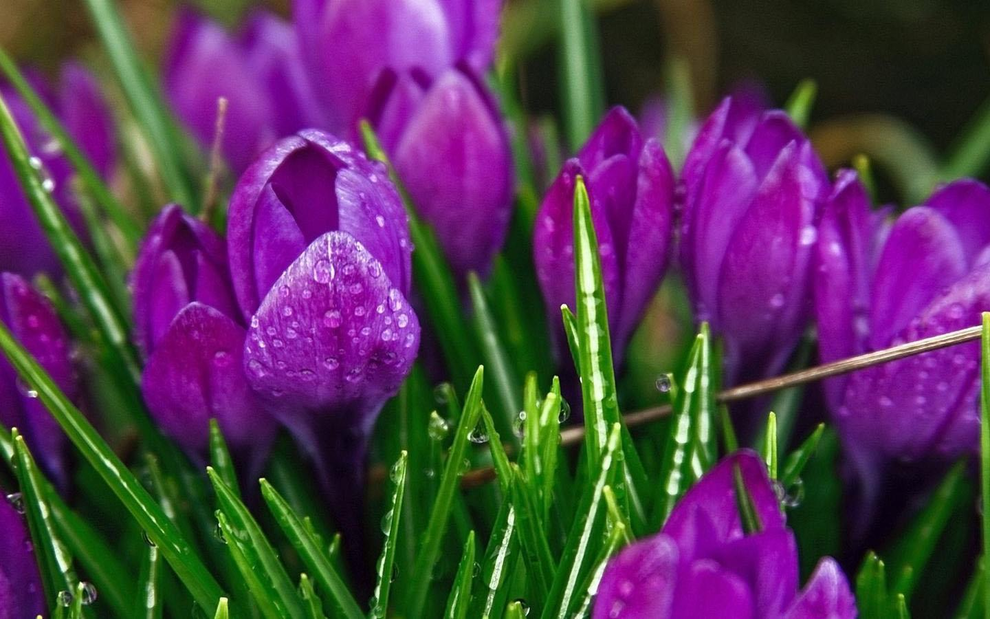 Purple Flower Wallpaper 101 Apk Download Android Personalization Apps