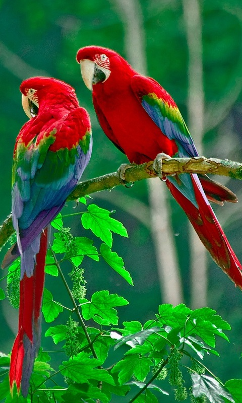 Download Birds Live Wallpaper 1 0 Apk Android Personalization Apps