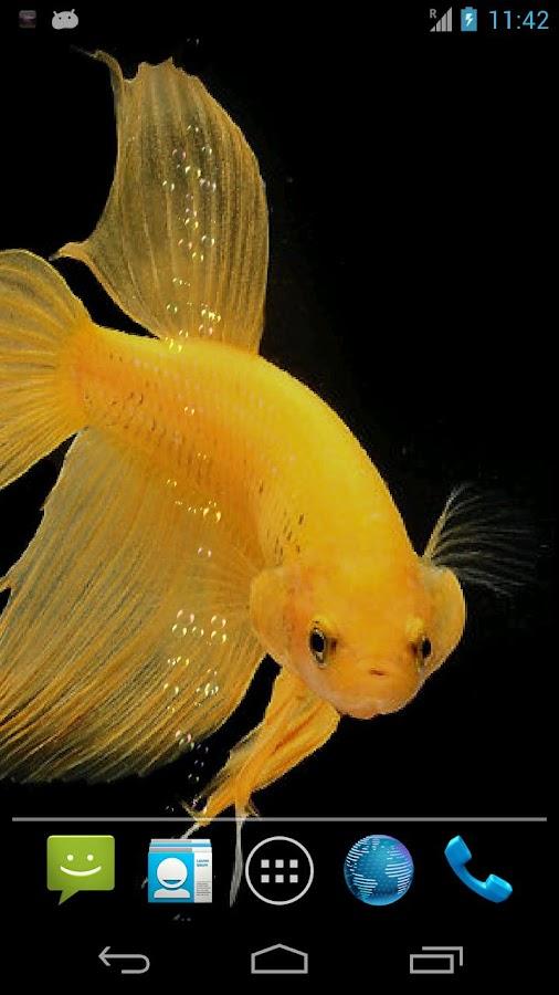 Betta Fish Live Wallpaper 602 Apk Download Android