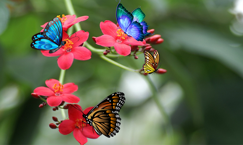 3D Butterfly Live Wallpaper 1.4 APK Download