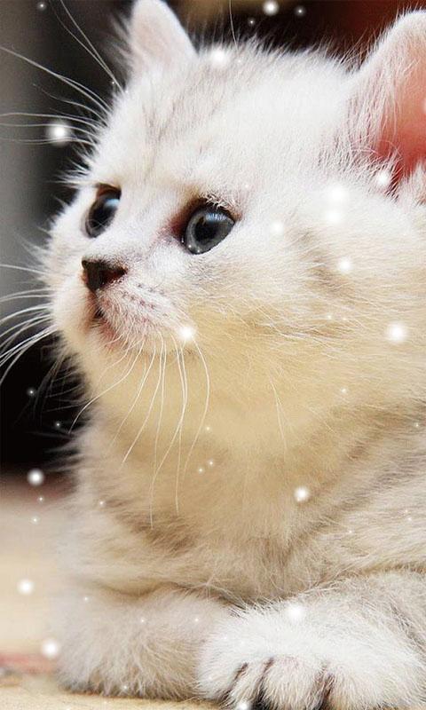 Cute Cat Wallpaper Hd For Mobile Hd Blast