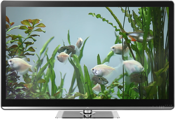 Fish Tank on TV via Chromecast 1 1 APK Download - Android Lifestyle Apps